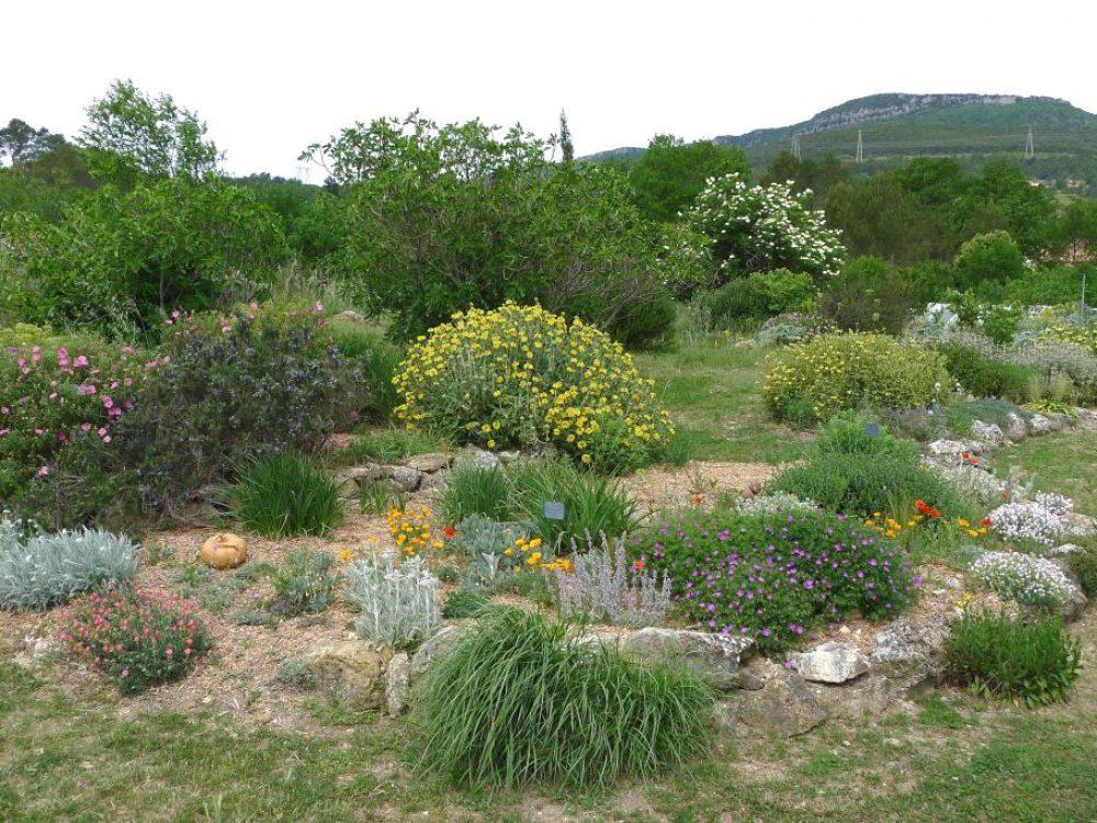 jardin-essai-phlomis-r