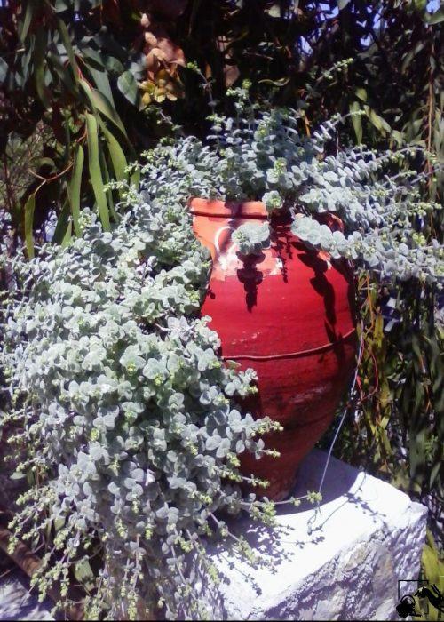 origanum-pseudodictamnus_pepinieredelalibre_jardin-sec-r